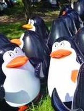 """游客带羽绒服去围观万只""""企鹅"""""""