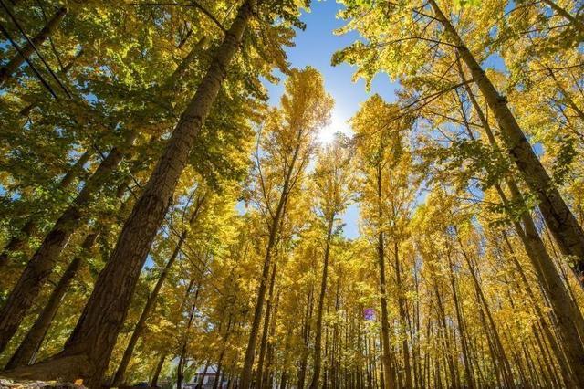 南京学者揭开3.8亿年前世界最早树木生长之谜