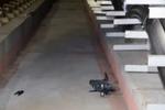 南京一男子任性放飞无人机 失控坠机后险逼停地铁