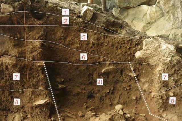 南京专家发现最早淀粉化石 距今已有2.8亿年历史