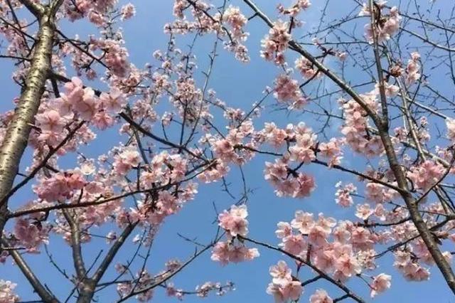 倒春寒!明天江苏最低气温仅2℃ 南京今天降温13℃