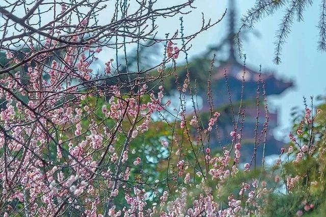 云龙湖是徐州的城市明珠,