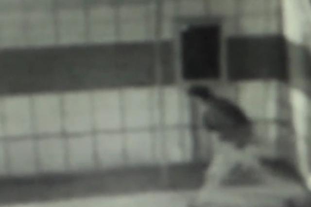 犯罪嫌疑人潜入学校时的监控视频截图。 上游新闻 图