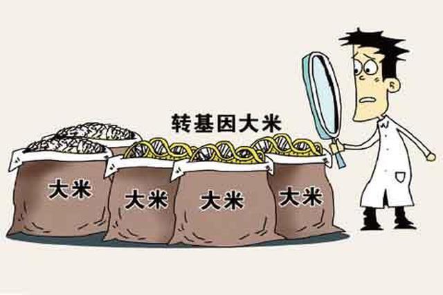 转基因农产品只有棉花和木瓜获批 转基因大米和玉米是误传