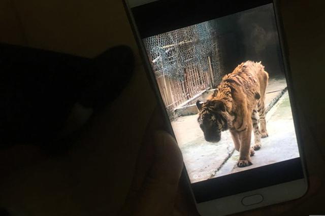 桂林发生老虎伤人事件 1名饲养员被咬死