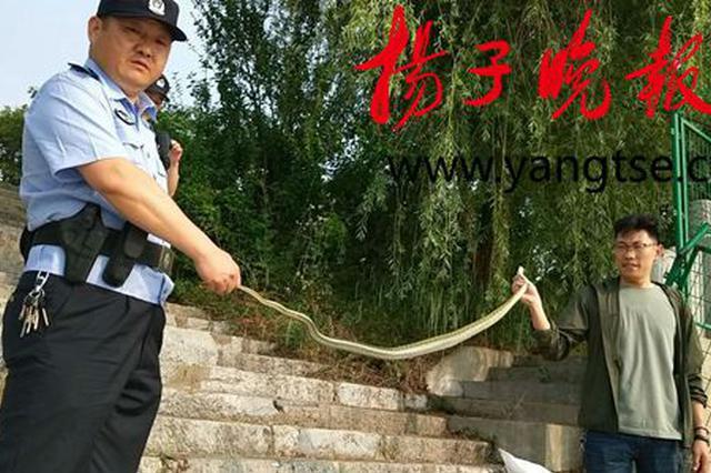 3米长婴儿手臂粗大蛇入室扰民 被扬州民警擒获放生