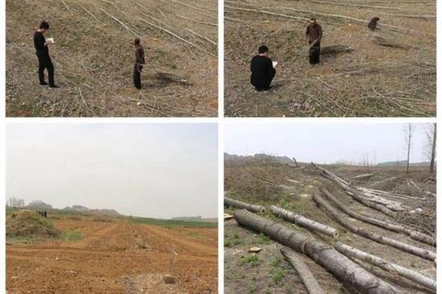 村支书毁林被捕 带人强行砍伐7000多棵杨树