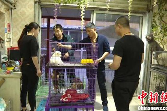 直播养猴牵大案:35人涉案 村干部擅自贩卖猕猴21只