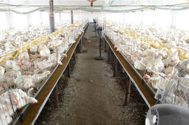治理畜禽养殖污染 江苏完成禁养区关闭搬迁任务