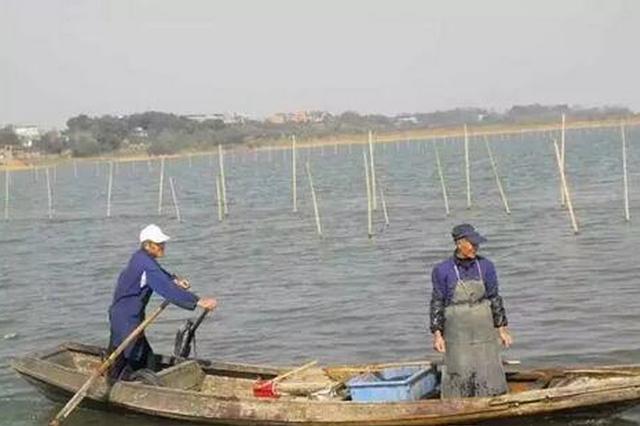 太湖围网清拆调查 螃蟹养到太湖里 没想到代价这么大