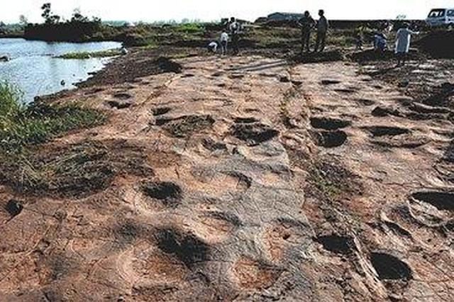 侏罗纪猜想证实 山东郯城发现300个恐龙足迹
