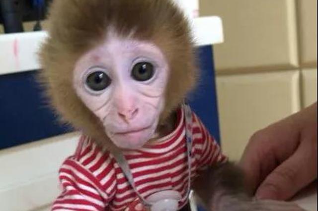 私自买卖8只猕猴当宠物  连云港跨省抓获11人