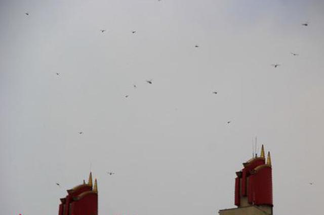 图为大量蜻蜓飞上天空。