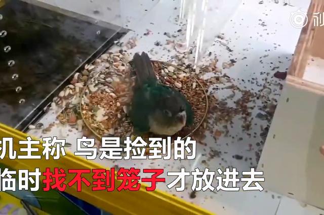 继活龙虾活螃蟹后 台湾抓娃娃机内又夹出了活鹦鹉