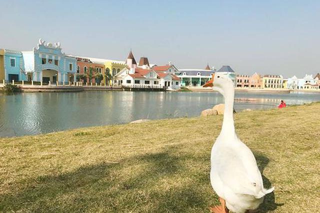 """上海海事大学""""录取""""一只鹅 网友称其像热播剧角色"""