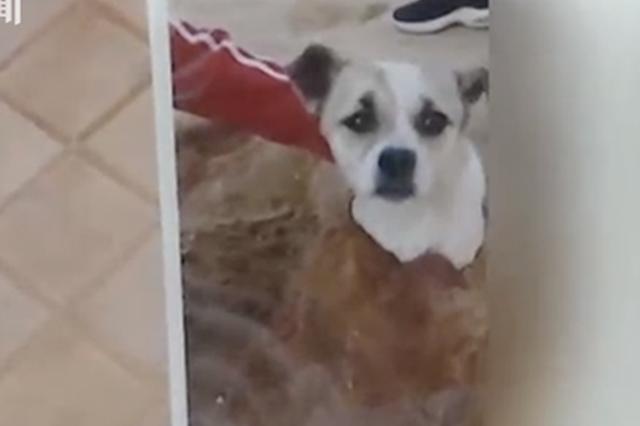 宠物犬伤人被打死 狗主人:它怎么光咬你不咬别人