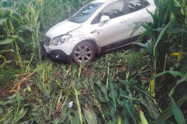 女子驾车冲进玉米地昏迷20小时 发定位按喇叭自救