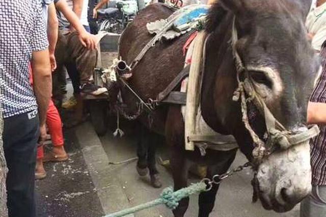 驴被狗咬后撞坏奥迪 奇葩事故令人哭笑不得