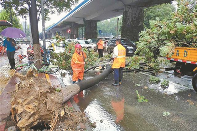 """台风""""摩羯""""带来狂风暴雨 南京大树被连根拔起(图)"""