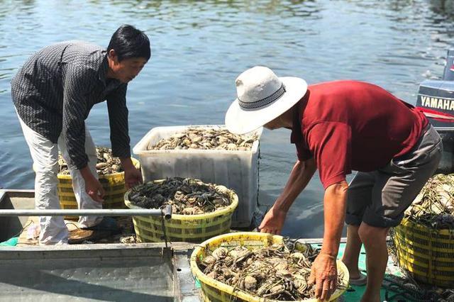 污水过境洪泽湖 泗洪临淮约2万亩螃蟹死绝