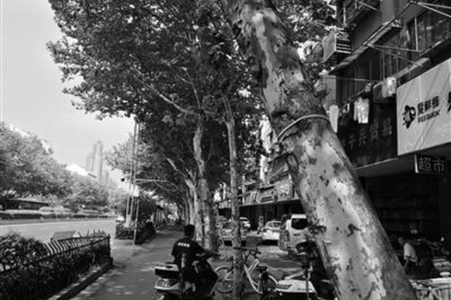 南京城市绿化条例9月1日起实施 明确损坏绿化行为