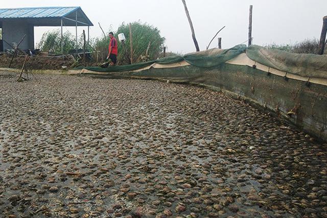 洪泽湖污染损失2.34亿 江苏组织渔民生产自救