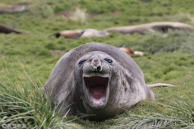 搞笑野生动物摄影大赛 每张都是表情包
