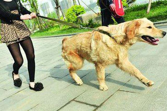 苏州时隔11年修订条例从严管理养犬行为