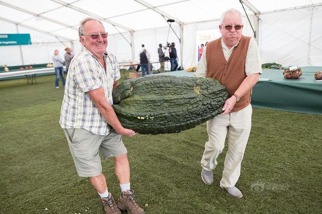年度巨型蔬菜大赛开赛 各类蔬菜界巨无霸重磅来袭