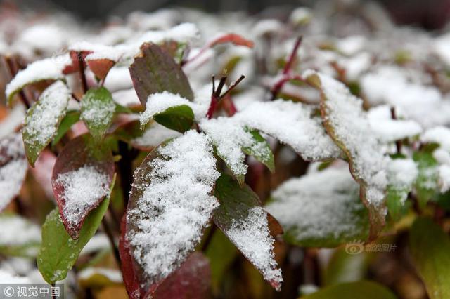 """内蒙古呼伦贝尔降雪 网友笑称""""一觉醒来冬天到了"""""""