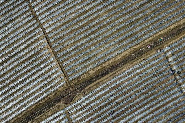 江苏地膜使用量4.3万吨 回收利用仅三成