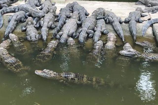 安徽扬子鳄保护区内停止征地 停止26个建设项目施工