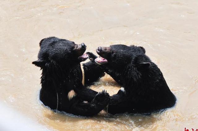 男子猎杀黑熊回家肢解被查 获刑两年被罚8000元