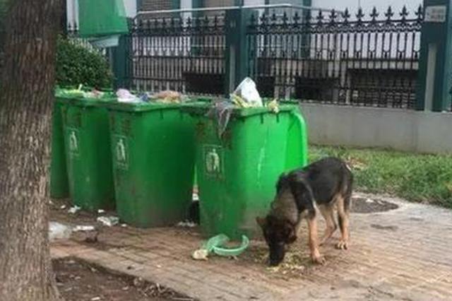 """警犬被認流浪狗帶走救助 救助者涉""""盜竊""""被立案"""