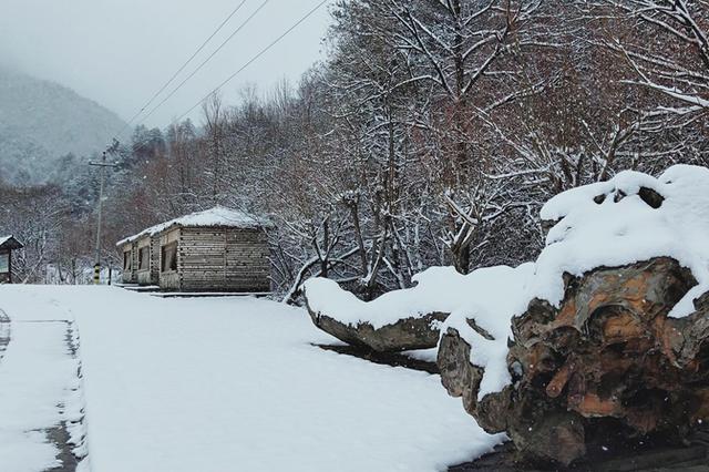 """江苏将迎今冬初雪 """"全能型""""冷空气在路上"""
