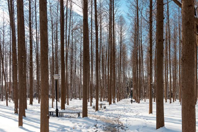 江苏北部最低温度-6℃未来两天仍多雨雪 南京:呵呵