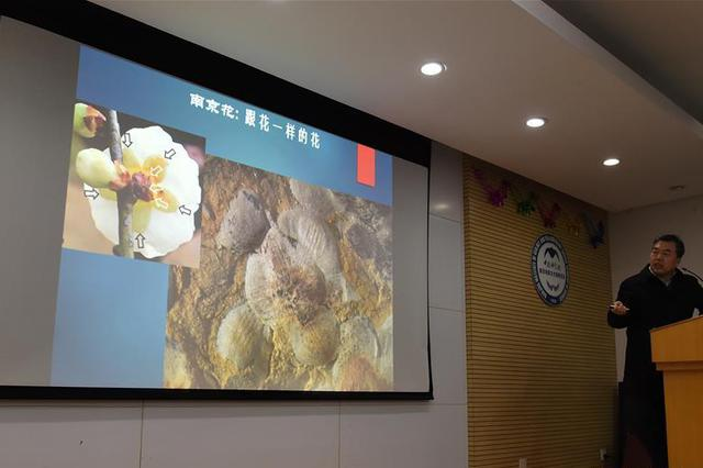 南京发现世界最古老的花朵化石