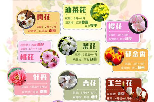 春季赏花指南来了!南京梅花、婺源油菜花、武汉樱花……