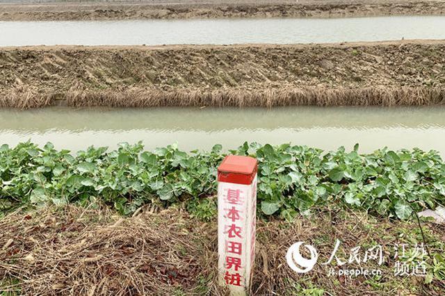 """溧阳基本农田里的怪现状:""""上""""茶山 """"下""""虾塘"""