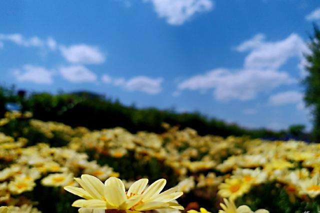江苏上月优良天数占比超八成  仪征江阴丰县等空气质量排名靠