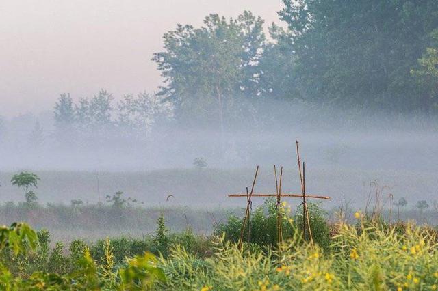 乡村产业融合发展路更宽 今年将建一批先导区