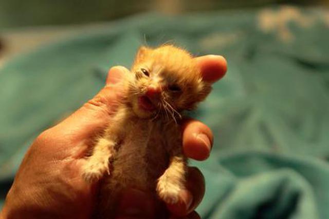 没有一句旁白 仍然催泪:宠物版《人间世》教你学会告别