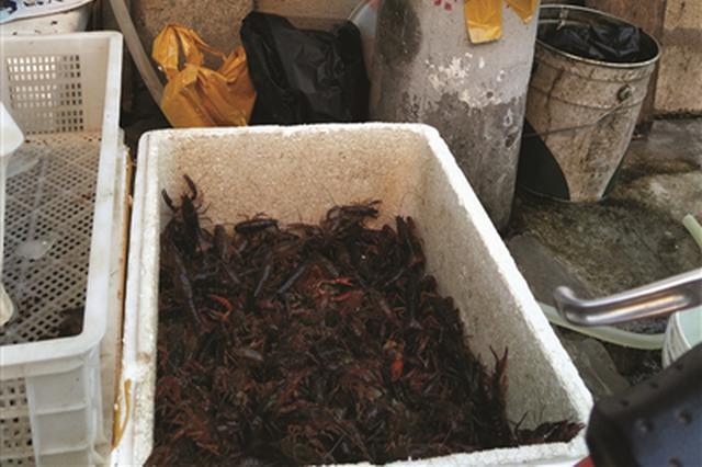 吃货有福啦!今年龙虾价比去年低5至10元