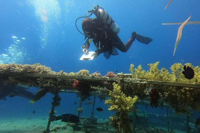 以色列近海岸珊瑚受污染威胁 潜水员下海采集转移