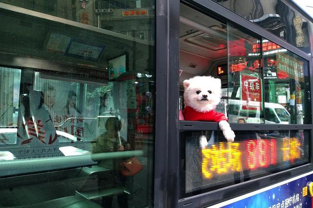 先乘车后付费 南京推出新型公交卡