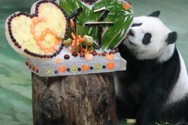 赠台大熊猫团团、圆圆长女6岁 动物园办庆生派对