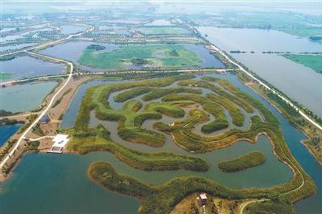 航拍淮安白马湖国家湿地公园芦苇迷宫