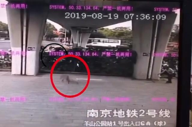 野豬闖進南京地鐵站被嚇跑 網友:這只豬我認識
