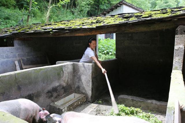 多地部署稳定生猪生产:尽快将补贴发放到位,鼓励养殖恢复