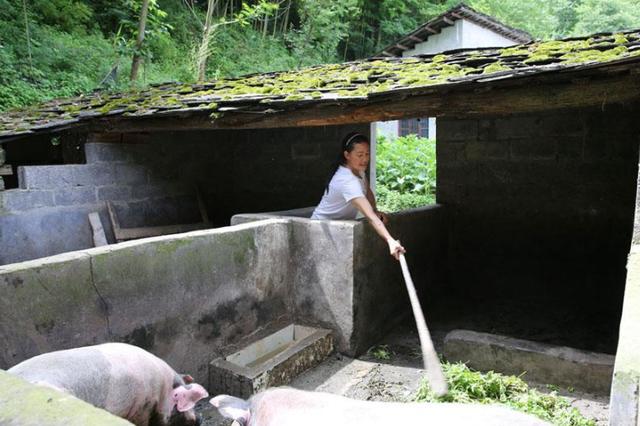 专家:肉价上涨源于猪瘟及一些地方限制养猪业